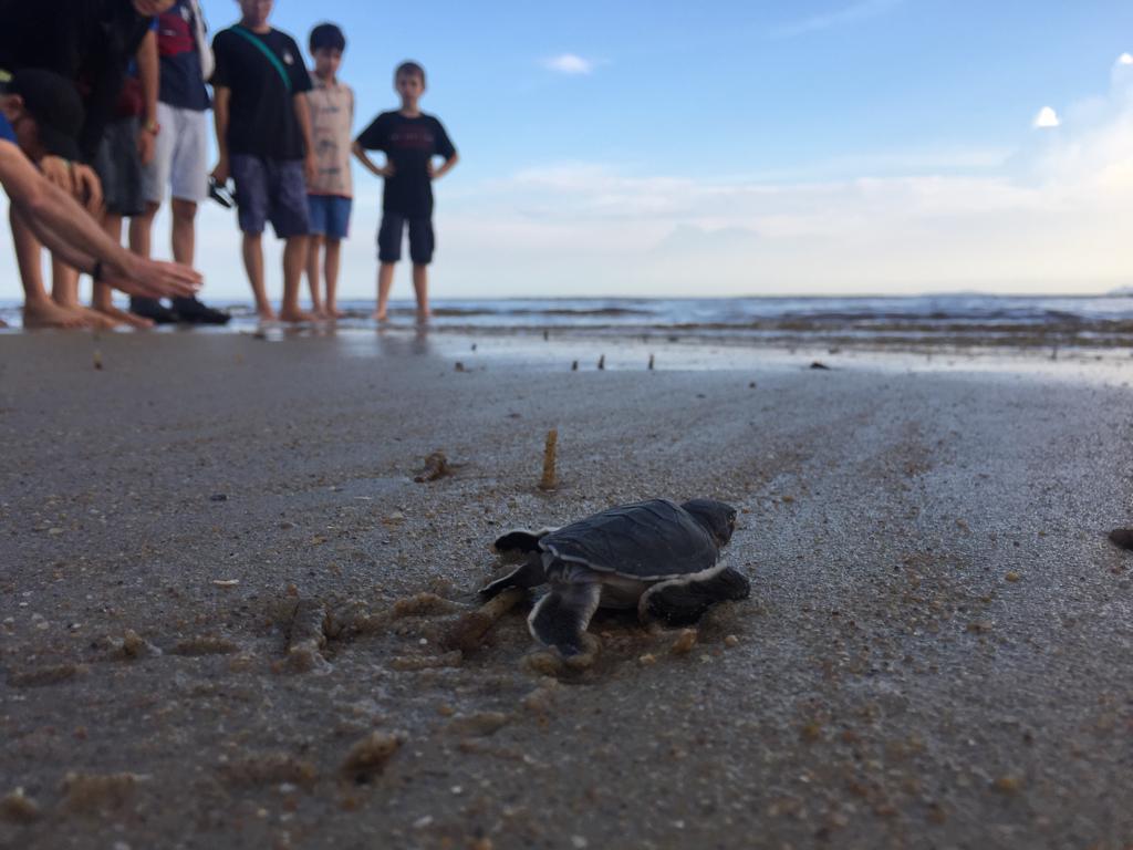 CSR Turtle Sanctuary (2)