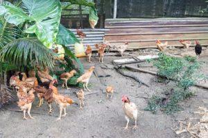 Farm To Table Tour (1)