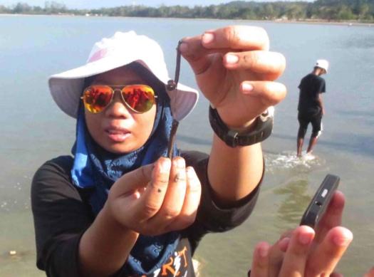 Marine Biology Beach walk (3)