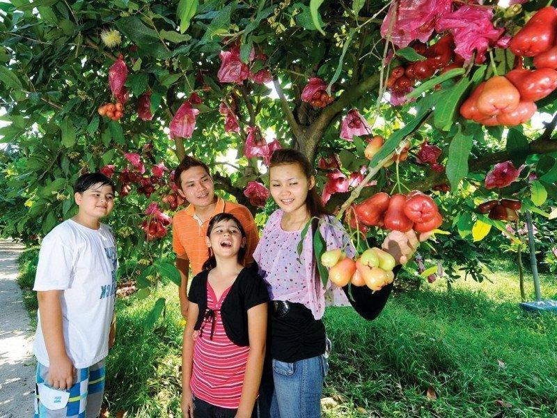 fruitfarm