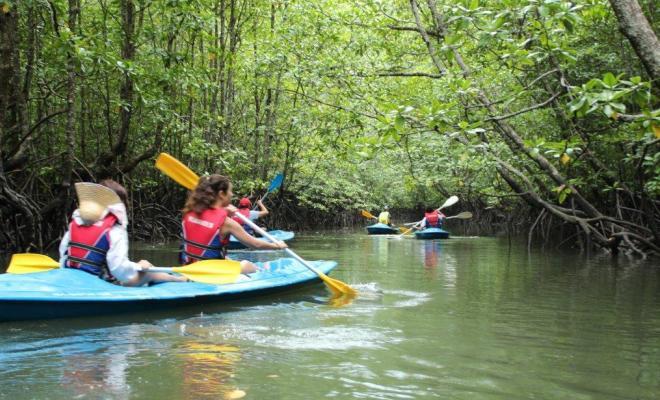 Mangroves-in-Langkawi