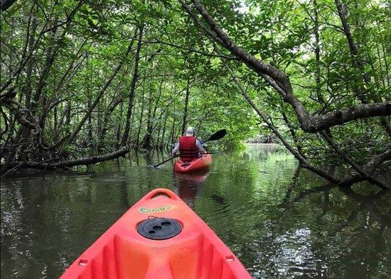 langkawi-mangrove-tour